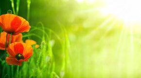 « Soigneurs de terre » : un excellent reportage de France 2 sur l'agriculture et l'agro écologie